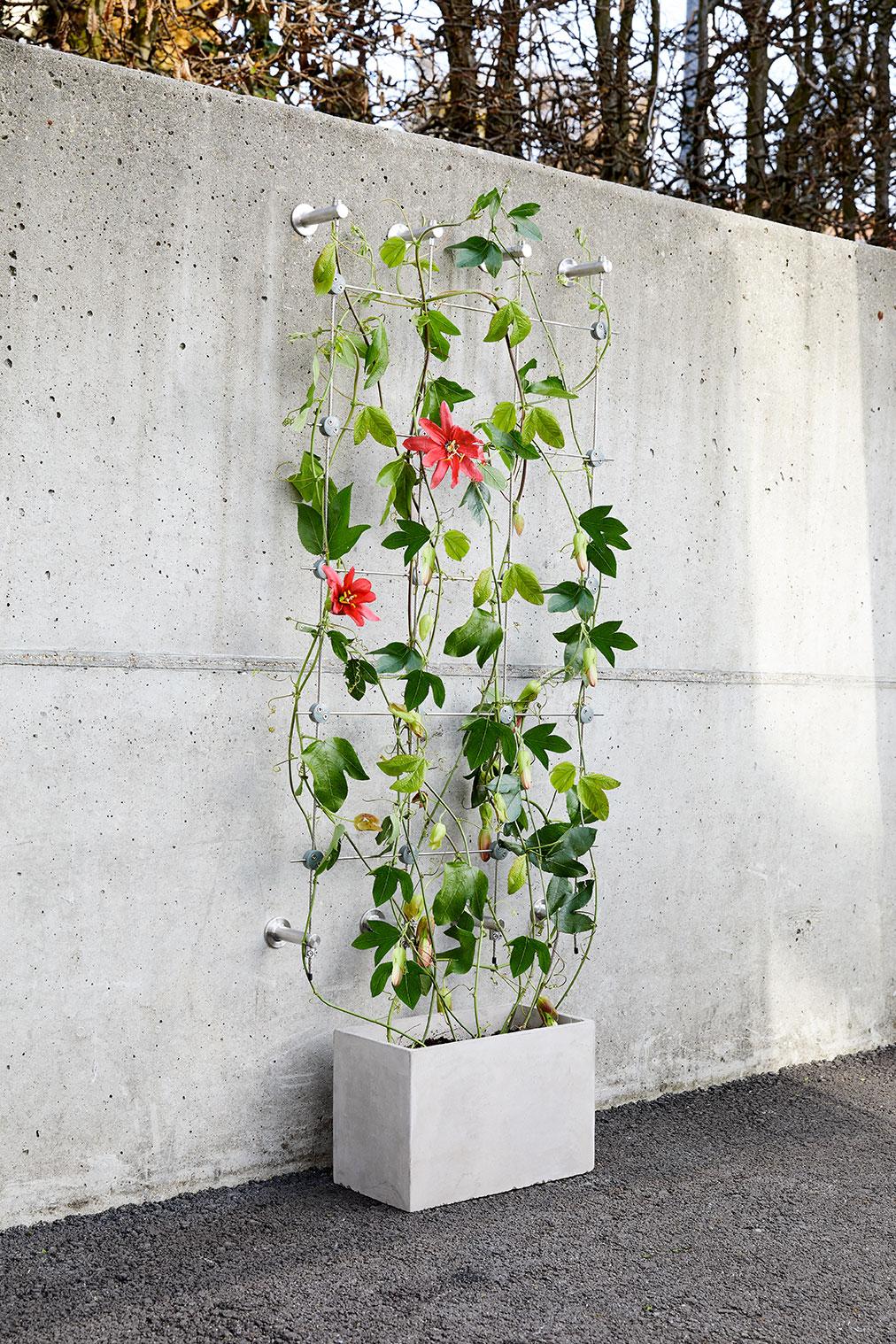 Klättrande växter på vajer från Jakob rope system