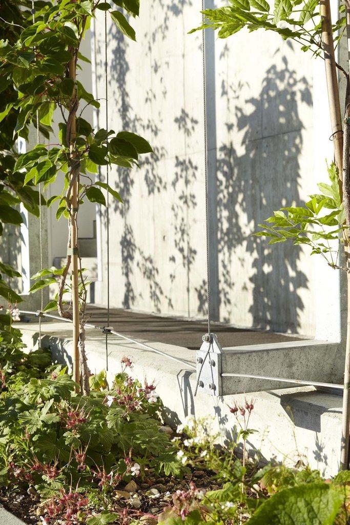 Horisontella och vertikala vajerrep för klättrande växter