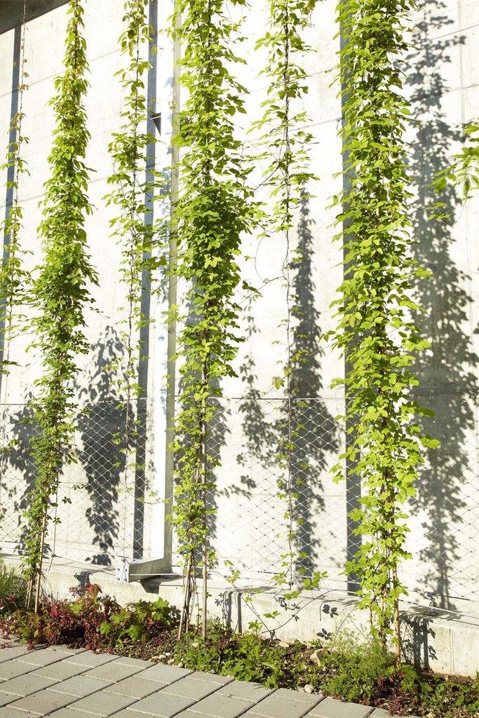 Vajerlösning i rostfritt stål för klätterväxter