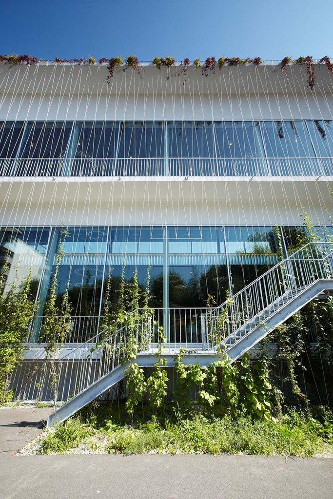Vertikala vajrar för klätterväxter