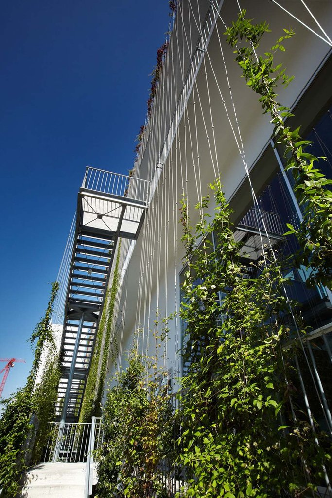 Jakob rope systems gröna vajer som skapar en härlig miljö för klätterväxter